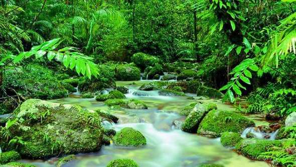 mossman gorge far north queenslnad