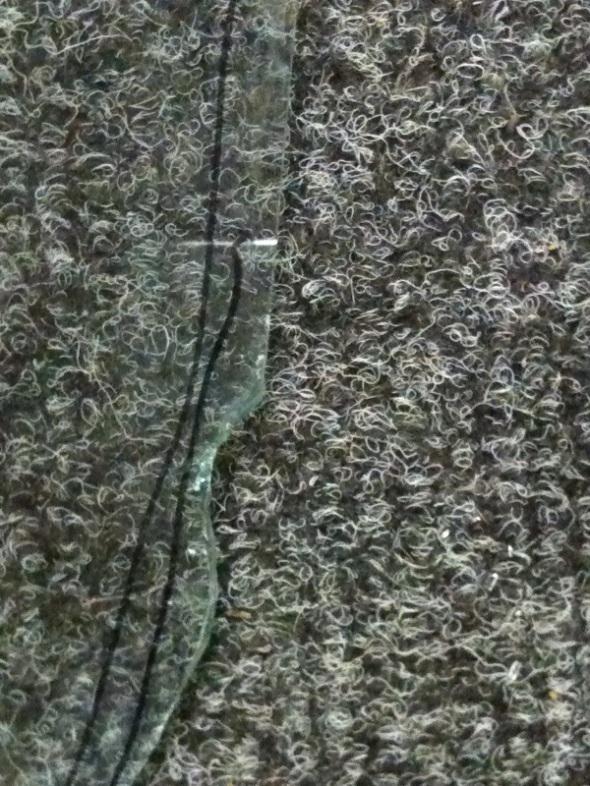 bug eaten edges